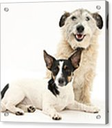 Dogs Acrylic Print
