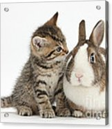 Kitten And Rabbit Acrylic Print