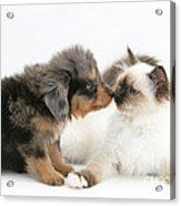 Puppy And Kitten Acrylic Print