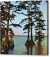 Reelfoot Lake Acrylic Print