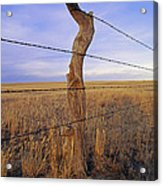 A Barbed Wire Fence Stretches Acrylic Print by Gordon Wiltsie