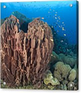 A Barrel Sponge Attached To A Reef Acrylic Print