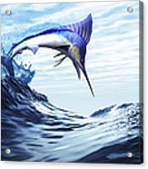 A Beautiful Blue Marlin Bursts Acrylic Print