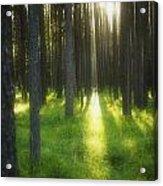 A Beautiful Wooded Area Acrylic Print