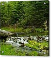 A Beaver Dam Spilling Over Acrylic Print