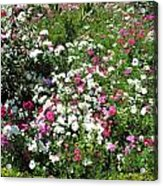 A Bed Of Beautiful Different Color Flowers Acrylic Print
