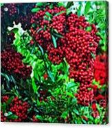 A Berry Merry Christmas Acrylic Print
