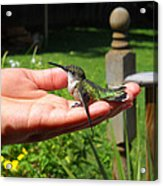 A Bird In The Hand. Acrylic Print
