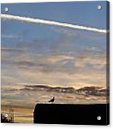 A Bird Outlined Against The Setting Sky At Dover Castle Acrylic Print