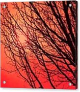 A Black Winter Tree On Red Acrylic Print