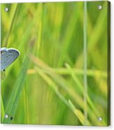 A Blue And Grass Acrylic Print