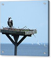 A Boat Watching Osprey Acrylic Print