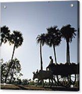 A Boy Rides On An Ox-drawn Cart Acrylic Print