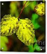 A Bright Yellow Dying  Acrylic Print
