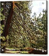A Broken Tree Acrylic Print