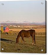 A Brown Horse Grazing In A Field In Acrylic Print by Michael Interisano