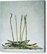 A Bunch Of Asparagus Acrylic Print