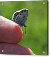 A Butterfly On The Finger Acrylic Print