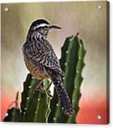 A Cactus Wren  Acrylic Print