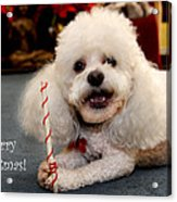 A Candycane For Puppy Acrylic Print