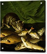 A Cat With Trout Perch And Carp On A Ledge Acrylic Print by Stephen Elmer