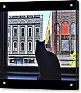 A Cat's View Acrylic Print by Joan Meyland