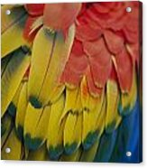 A Close-up View Of A Parrots Rainbow Acrylic Print