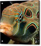 A Close-up View Of A Tropical Fish Acrylic Print