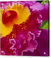 A Close View Of A Bright Pink Cattleya Acrylic Print by Jonathan Blair