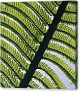 A Close View Of A Fern Acrylic Print