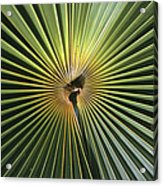 A Close View Of A Palm Frond Acrylic Print