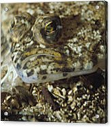A Close View Of A Well-camouflaged Acrylic Print