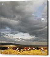 A Cloud-filled Sky Over A Yakima Valley Acrylic Print by Sisse Brimberg