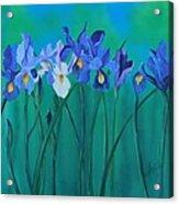 A Clutch Of Irises Acrylic Print