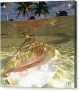 A Conch Shell Rests Beneath The Clear Acrylic Print