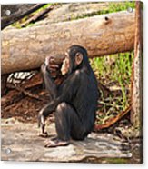 A Contemplative Youngster Acrylic Print