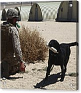 A Dog Handler Calls Over A Black Acrylic Print by Stocktrek Images