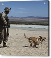 A Dog Handler Conducts Improvised Acrylic Print by Stocktrek Images