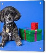 A Dog With Some Gifts Acrylic Print