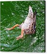 A Ducking Duck Acrylic Print