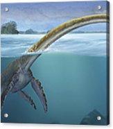 A Elasmosaurus Platyurus Swims Freely Acrylic Print