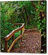 A Fall Walk Acrylic Print