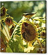A Feast For Some ... Acrylic Print