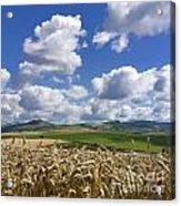 A Field Of Barley . Auvergne. France Acrylic Print