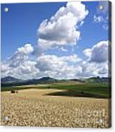 A Field Of Wheat Auvergne. France Acrylic Print