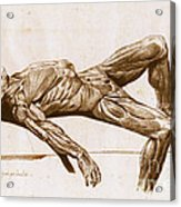 A Flayed Cadaver Acrylic Print