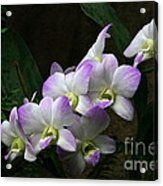 A Flight Of Orchids Acrylic Print