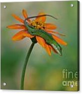 A Flower For Me Acrylic Print