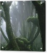 A Fog-enshrouded Rain Forest In Rwandas Acrylic Print