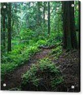 A Forest Green Acrylic Print